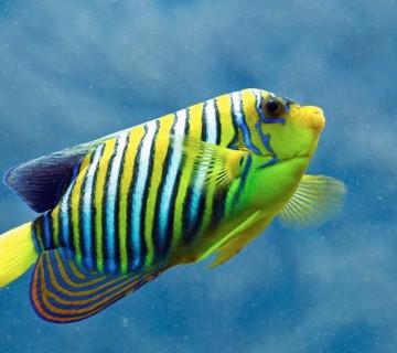 progasta ribica iz tropskega akvarija