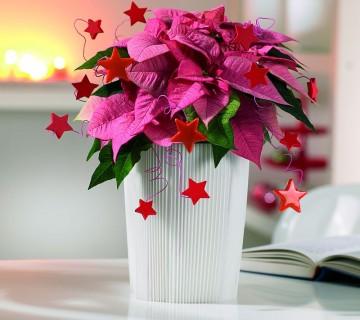 božična zvezda z okrasnimi zvezdicami