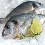 ribi na ledu