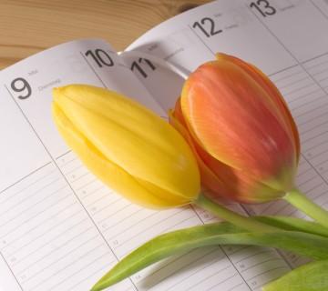 tulipani in rokovnik s koledarjem
