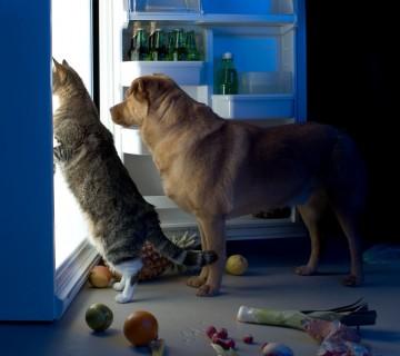mačka in pes ponoči brskata po hladilniku