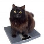 črna mačka na tehtnici