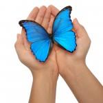 dlani, ki držita modrega metulja
