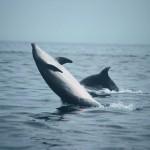 delfin v morju