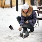 hranjenje golobov