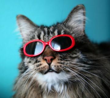 maček s sončnimi očali