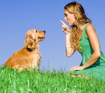 učenje psa, ženska psu žuga s prstom