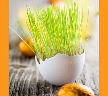 poganjki trave v jajčni lupini