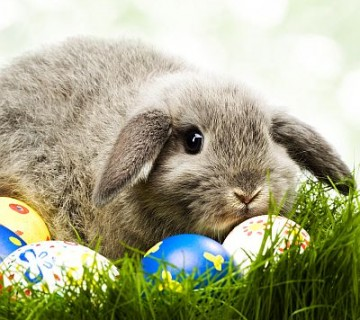 siv zajček med pirhi
