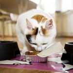 mačka je hrano iz originalne embalaže