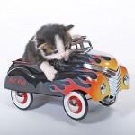mucek v avtomobilu -igrački
