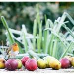 ptič in jabolka ob s slano prekritih rastlinah