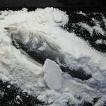 brancin v soli